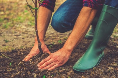 地植え 土 苗植え