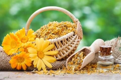 カレンデュラ 効能 花 乾燥 ドライフラワー キンセンカ 金盞花 ポットマリーゴールド
