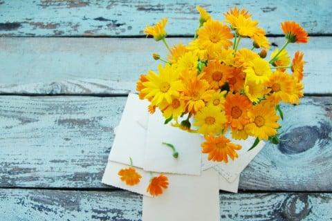 キンセンカ ポットマリーゴールド 金盞花 カレンデュラ オレンジ 黄色 花 テーブル 封筒 手紙