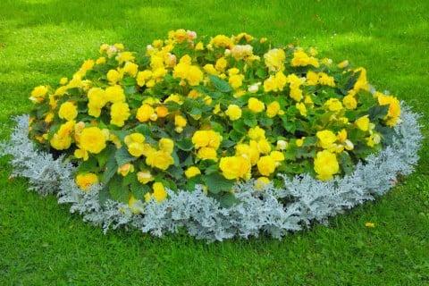 花壇 寄せ植え レンガなし
