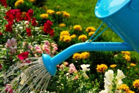 花壇 水やり 花