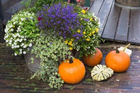 花壇 秋 寄せ植え 鉢