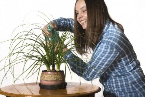 トックリラン 水やり 観葉植物