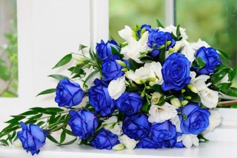 バラ 白 青