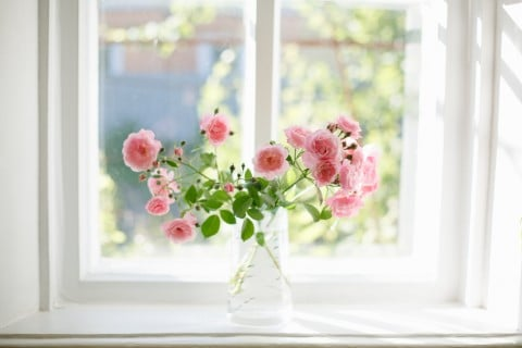 ラナンキュラス 切り花 窓辺