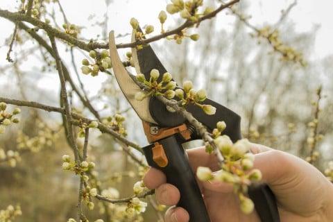 挿し木 増やし方 剪定 切り戻し (3)