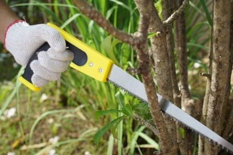 挿し木 増やし方 剪定 切り戻し (4)