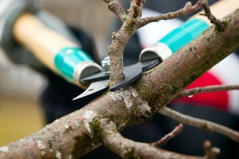 挿し木 増やし方 剪定 切り戻し (5)