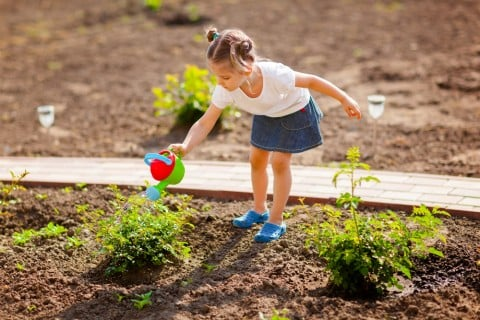 水やり ガーデニング 地植え