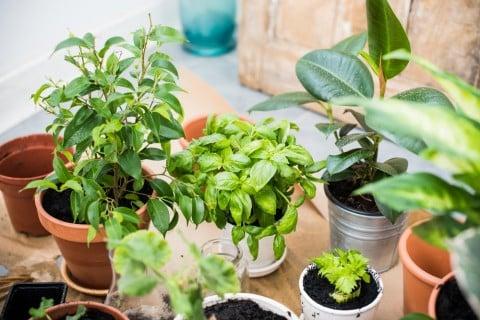 観葉植物 ベランダ