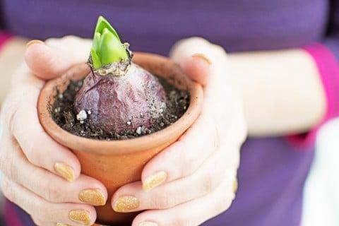 球根 植え付け 鉢植え