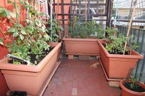 ベランダ 家庭菜園 プランター