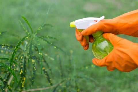 霧吹き 水やり 葉水 殺虫 殺菌 駆除 害虫 防虫