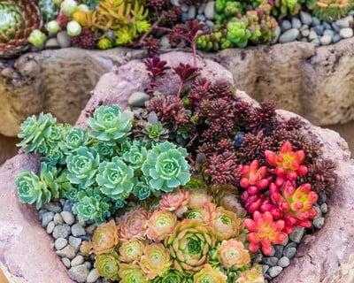 多肉植物 寄せ植え (10)