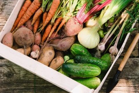 野菜 収穫 ジャガイモ タマネギ ニンジン ゴーヤ