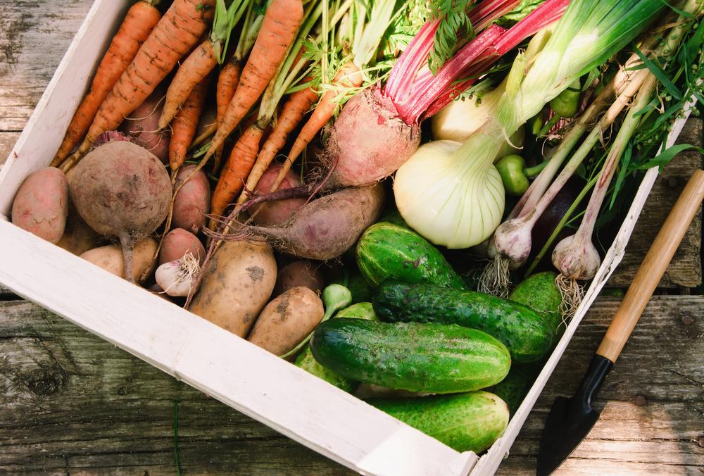 野菜 栽培 春