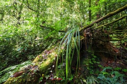 蘭 ラン 森林 着生植物