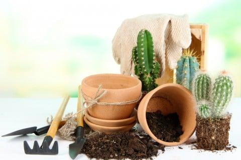 サボテン 鉢植え