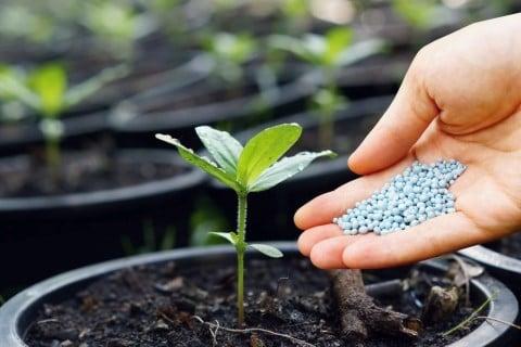 肥料 緩効性化成肥料 追肥