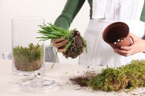 植え替え 鉢植え