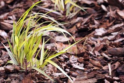 フウチソウ 地植え 葉