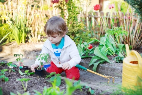 子供 家庭菜園 植え付け 土作り