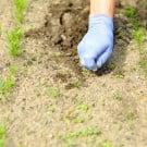 防草シート 雑草対策