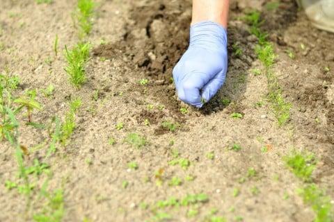 雑草 畑 土作り