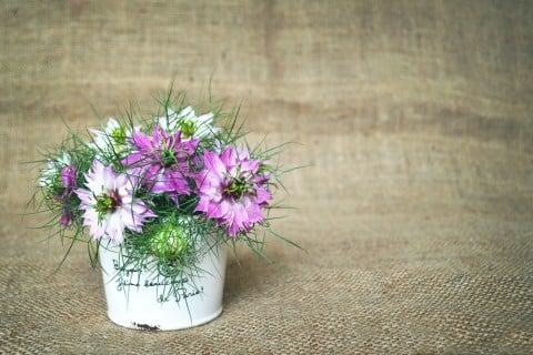 ニゲラ 紫 切り花