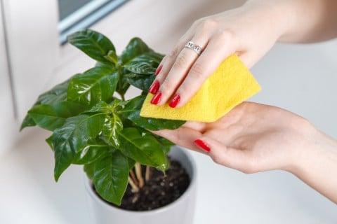葉 拭く 手入れ 防虫