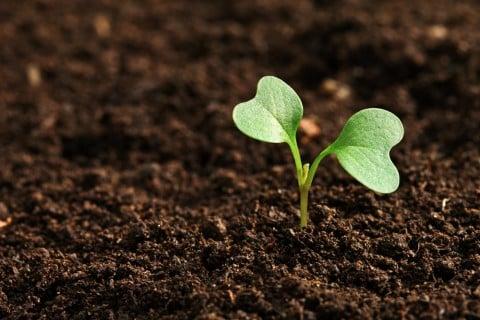 双葉 土 新芽 若葉 土作り 苗