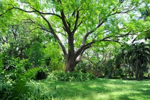 広葉樹 葉っぱ シンボルツリー