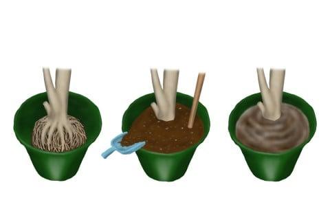植え付け 植え替え 鉢植え 水やり イラスト
