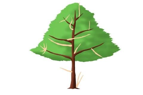 不要枝 ひこばえ 車枝 胴吹き枝 立ち枝、下がり枝 絡み枝 ふところ枝_イラスト