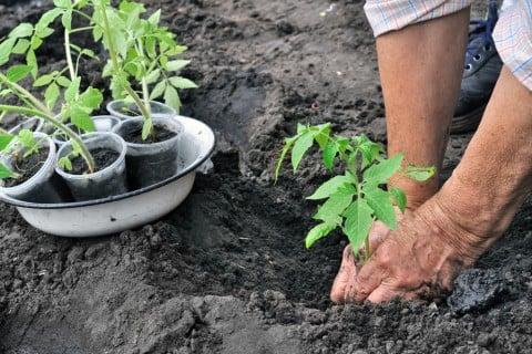苗 植え替え 育苗