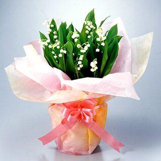 要出典 スズラン 鉢植え 母の日