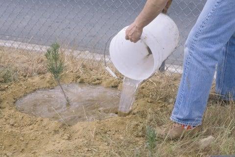 苗木 水やり 地植え