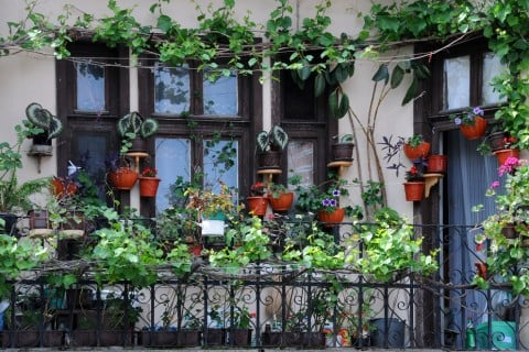 壁掛け 観葉植物 ガーデニング ベランダ