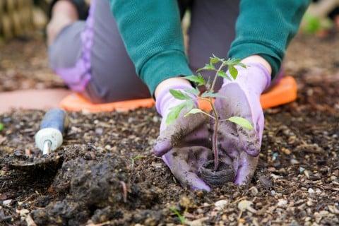 春 庭造り ガーデニング 植え付け