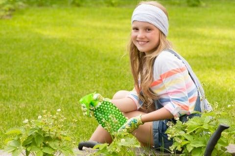 ガーデニング 水やり 肥料 薬剤