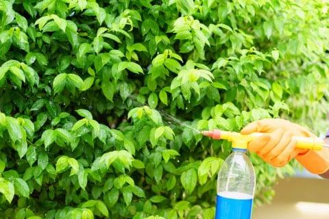 ガーデニング 水やり 霧吹き 肥料 薬剤 農薬