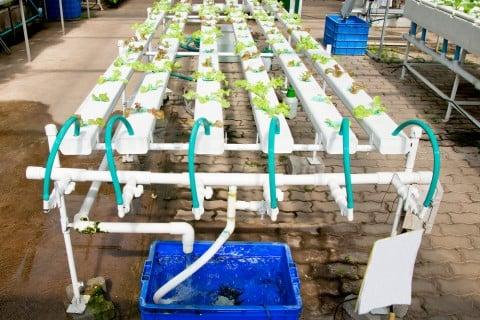 水耕栽培 水栽培