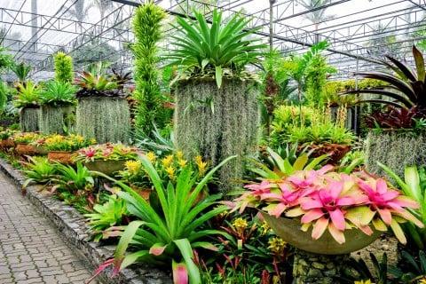 植物園 園芸 ガーデニング