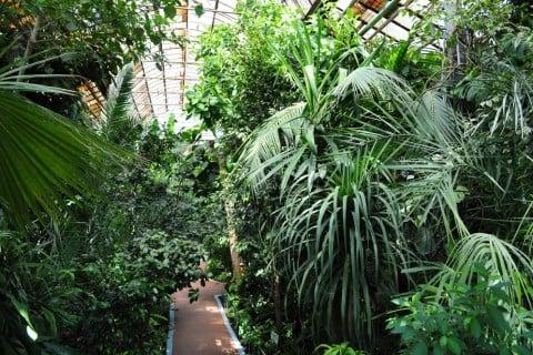 植物園 緑 ガーデニング