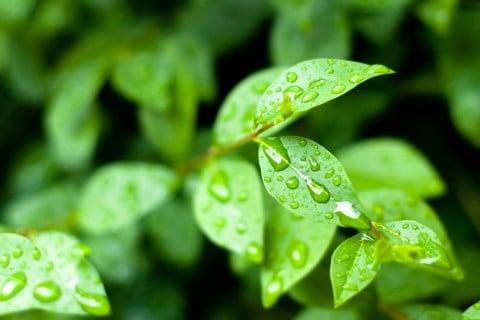 雨 6月 梅雨 庭 葉っぱ