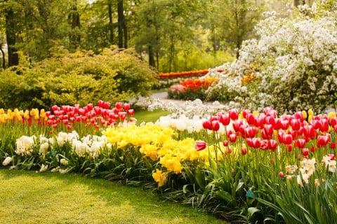 チューリップ ガーデニング 春