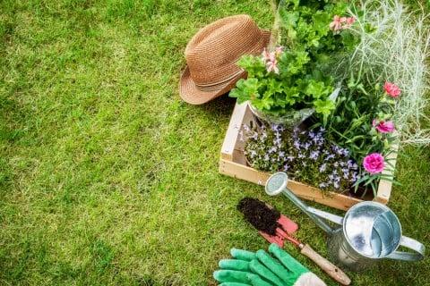 ガーデニング 庭 植え付け 苗 寄せ植え