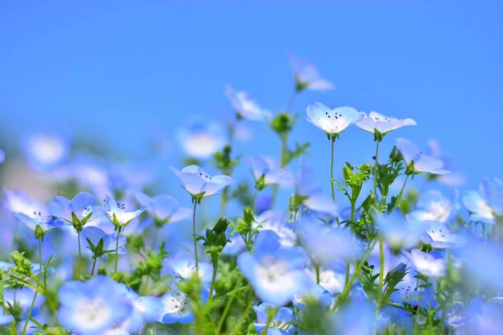 人気の青い花 10選 種類や名前 花言葉は Horti ホルティ By