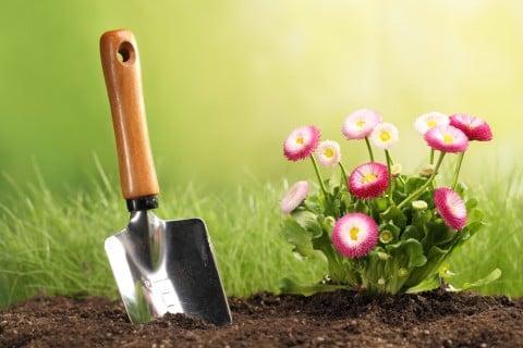 花 苗 植え付け