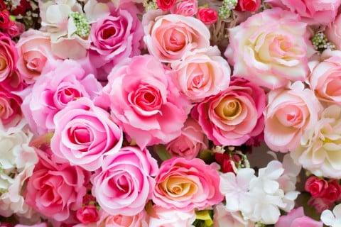 薔薇 バラ ピンク